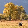 Sierra Pastorale I, Round Valley Area