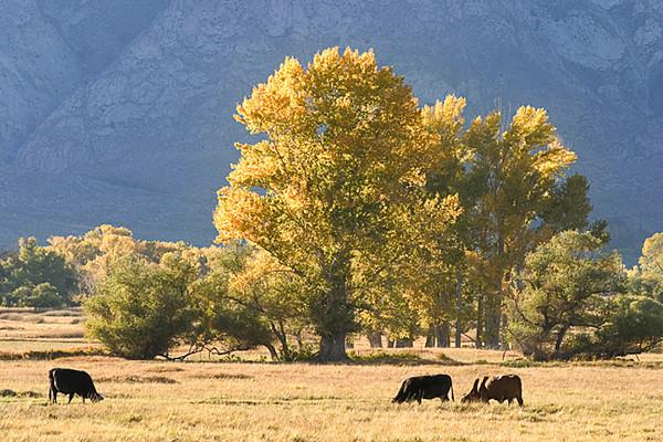 Sierra Pastorale II, Round Valley Area