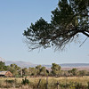 Owens Valley Farmstead
