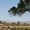 Owens Valley Farmstead