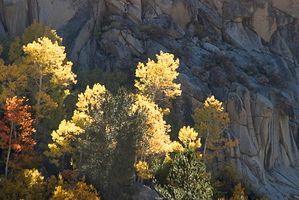 Along Bishop Canyon Walls