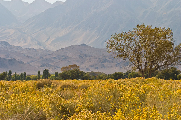 Owens Valley, Sierra Nevada Backdrop