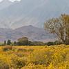 Owens Valley, Sierra Nevada Backdrop