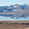 Mono Lake & Young Volcanic Craters #9872