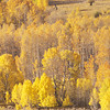 Fall in Shades of Yellow, Conway Summit