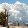 Bristlecone Cloudscape