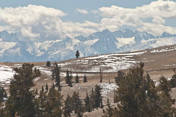 Bristlecones With Sierra Nevada Backdrop