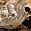 Bristlecone Swirls