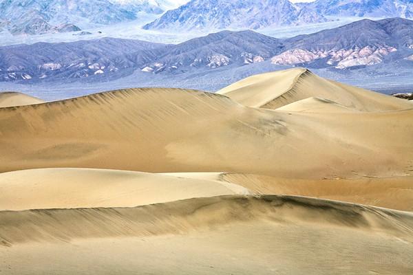 Mesquite Dunes #0301
