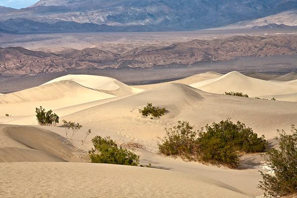 Mesquite Dunes #0325