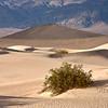 Mesquite Dunes #0322