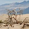 Mesquite Dunes #0212