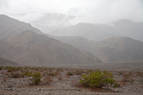 Rainy Day, Death Valley #0761  Near Stovepipe Wells.