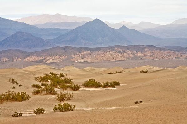 Mesquite Dunes #0274