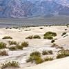 Mesquite Dunes #0302