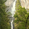 Yosemite Falls Through The Trees