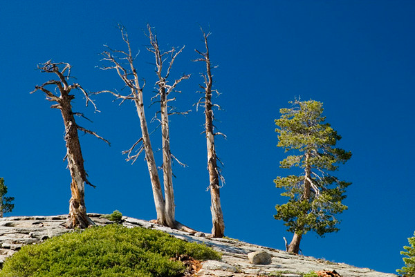 Four Out of Five (Up On Sentinel Dome)