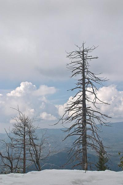 Trees, Season I