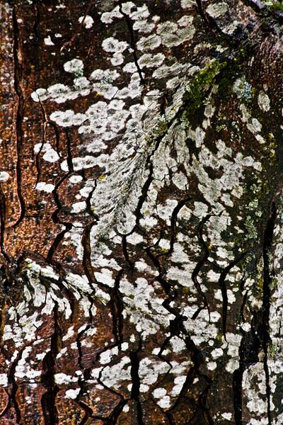 Lichen On Bark Abstract