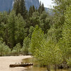 Cold Feet?  Merced River in Spring
