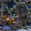 Monterey Bay Aquarium (coral community, various shells, cuttlefish)