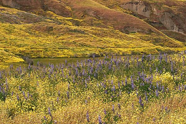 Cottonwood Canyon Bouquet