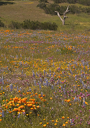 The Meadow in Spring (Shell Creek Road)