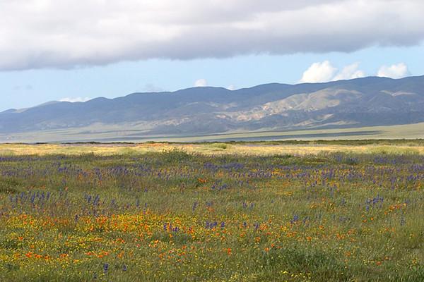 Carrizo Plain in Spring Finery