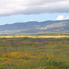 Carrizo Plain in Spring Finery