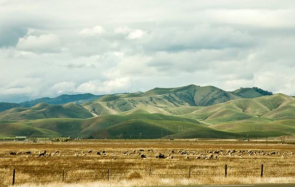 Velveteen Hills
