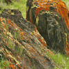 Lichen along Highway 140