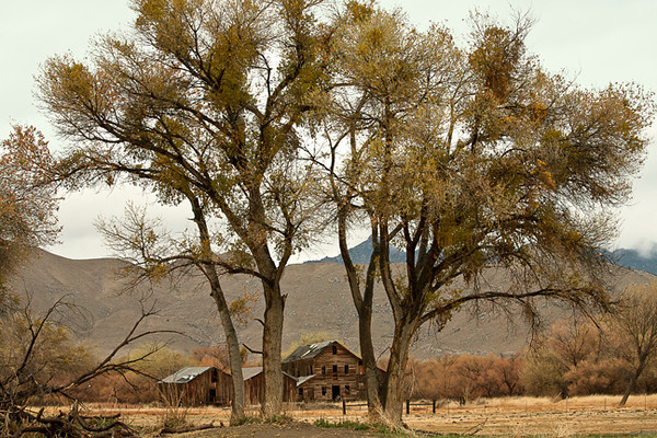 Abandoned Farmstead, Kern River Valley
