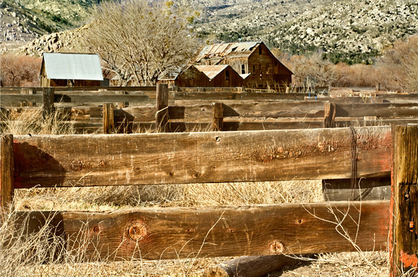 A Tough Life (Kern River Area)