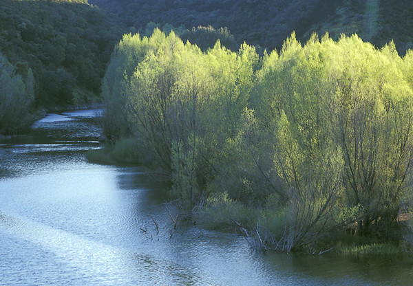 Napa River Evening