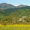 Napa Valley Vista