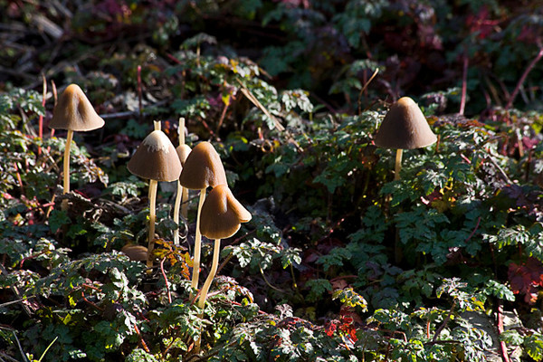 Wild Mushrooms In Golden Gate Park