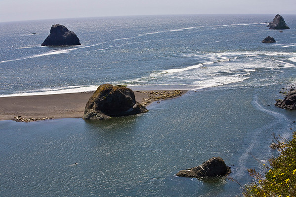 Sea Stacks & Seals at Goat Rock Beach