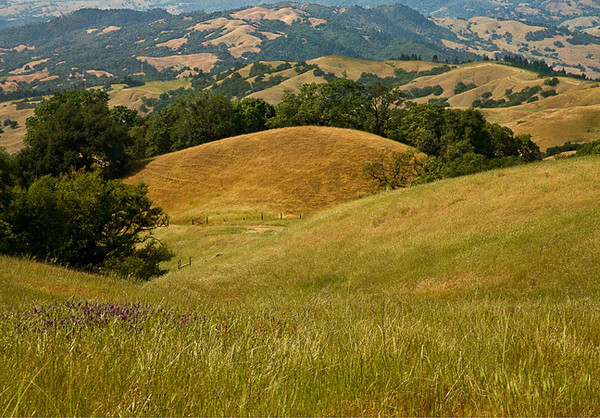 Sonoma Serenity, Pepperwood Preserve, Santa Rosa
