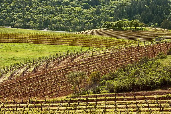 Vineyard Geometrics I