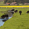 Petaluma Pastures