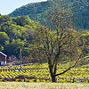 Caring for the Vineyard