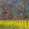 March Vineyard