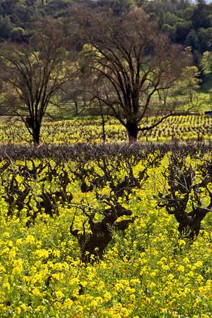 February in the Vineyard