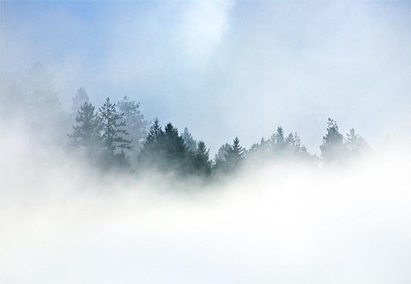 Fog Upon the Ridge