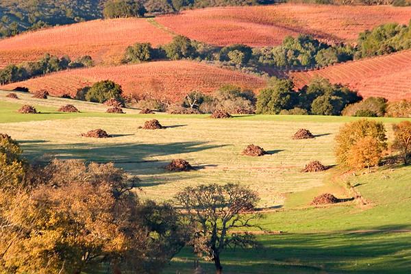 Sonoma Hills (After the Grape Harvest)