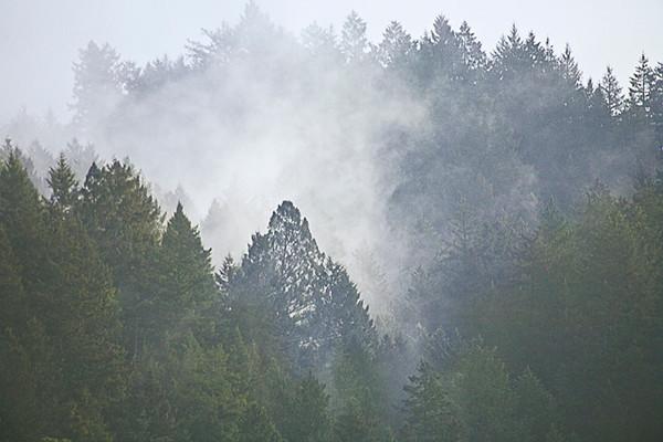 Amid the Trees on the Ridge