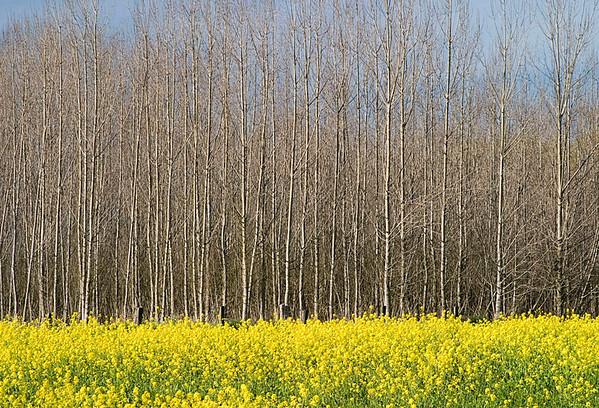 Sonoma Seasons-February, Sebastopol