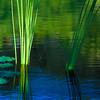 Reeds (Quarryhill Botanical Garden, Glen Ellen)