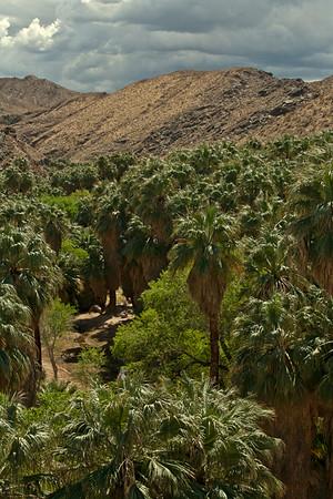 Palm Canyon Near Palm Springs