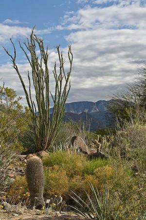 Ocotillo Vista at Living Desert